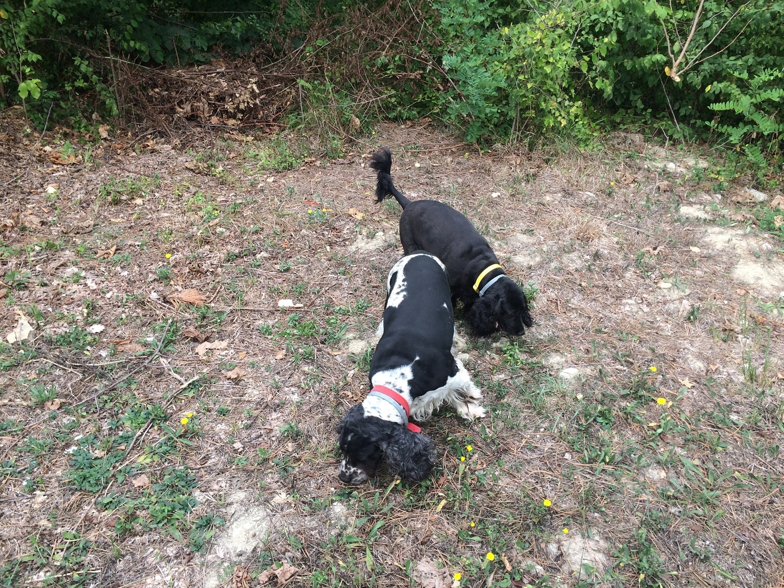 truffle-hunting-with-dogs-Umbria-min.JPG